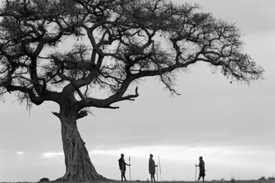 Masai warriors at dawn beneath a spreading fig tree