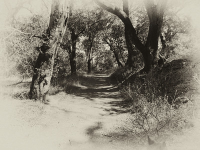 Portola Valley Trail with that antique look.