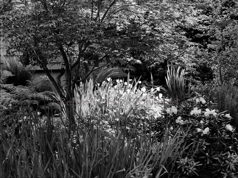 Garden Light Portland, OR.