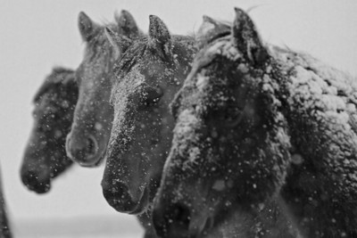 Faces in the Snow