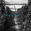 Harvest_Festival-3648-2