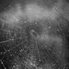 SpidersWebs-3688-2