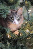 Christmas Tree Cat