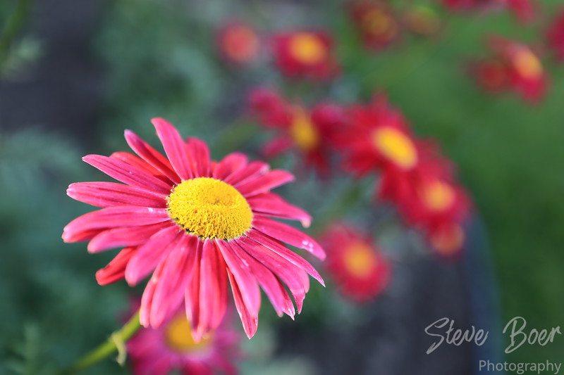 Reddish pink and yellow flowers