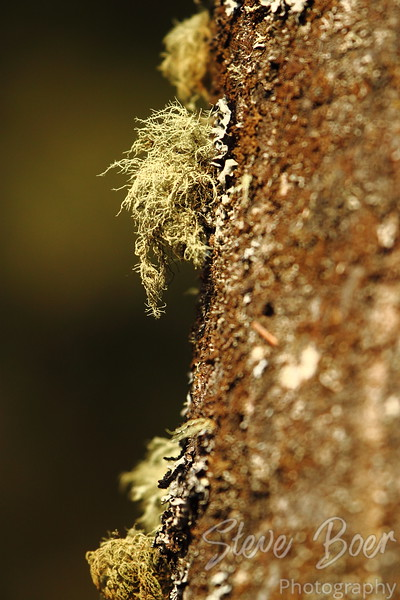 Tree with Moss and Lichen