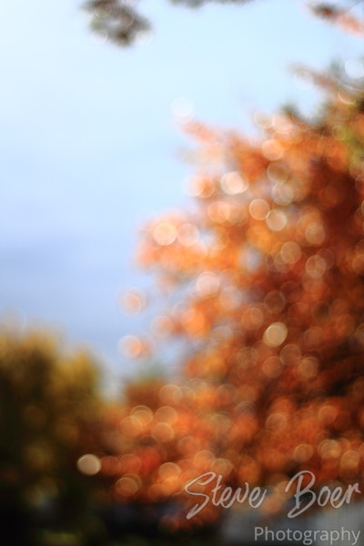 Turning Leaves into Bokeh