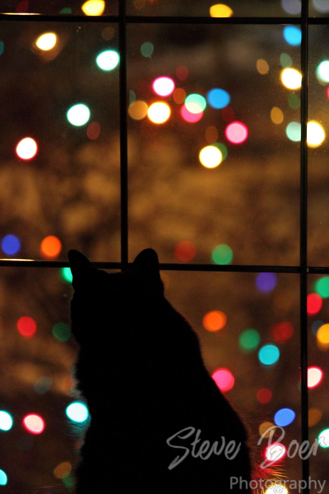 Christmas Light Cat
