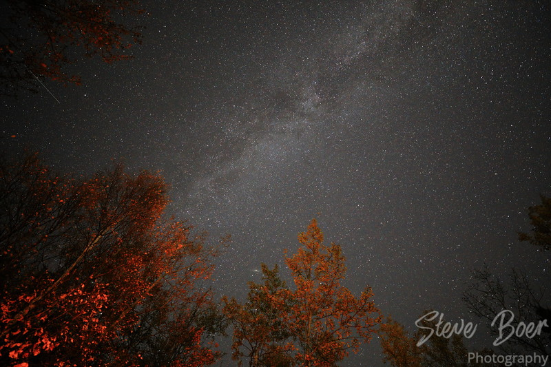 Milky way galaxy with trees lit by campfire