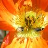 Orange brilliance