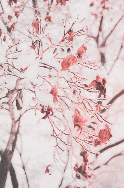 Crimson Chill