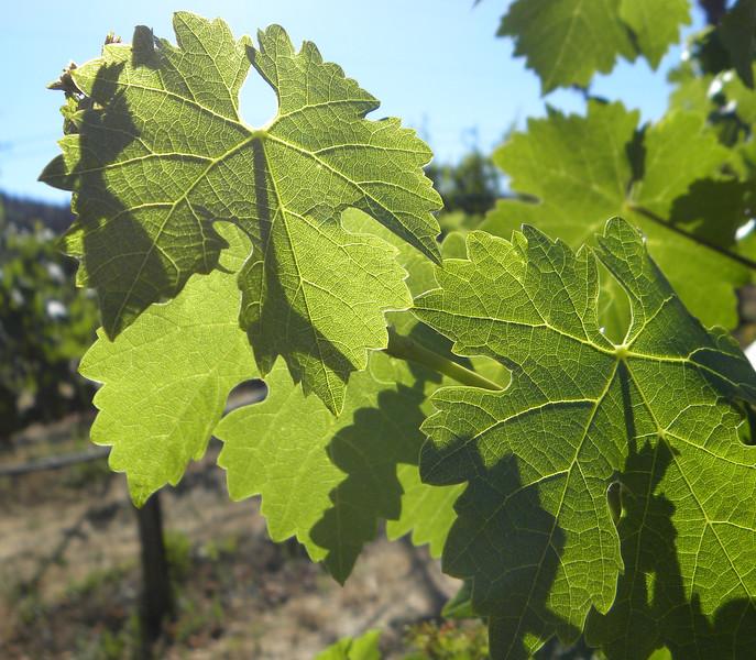 Glowing vines 3