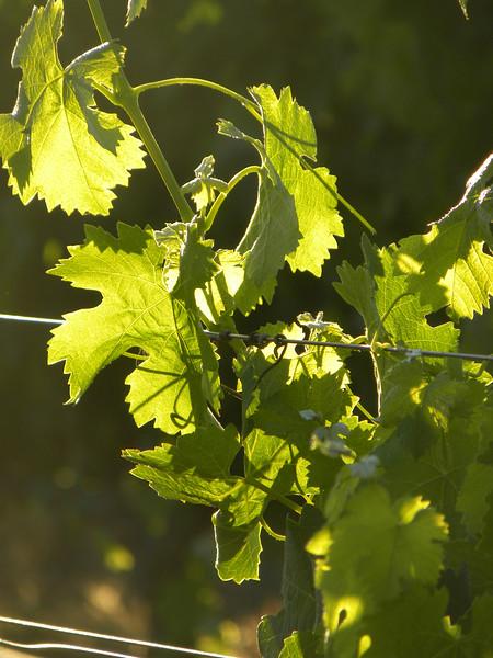 Glowing vines