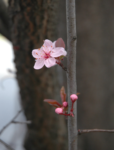 A Single Branch Bursts into Bloom