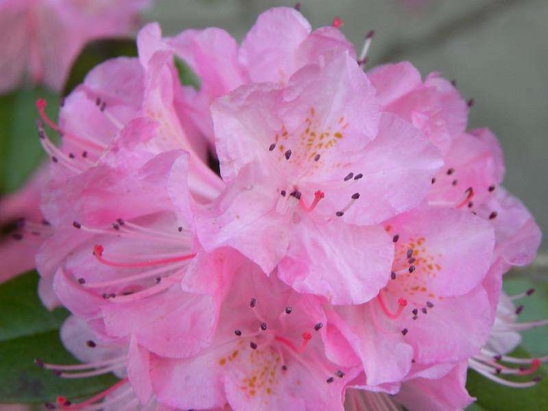 Wet pink