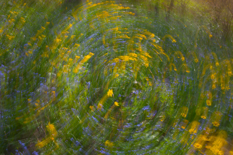 Flowering Vortex<br /> Abstract en camera<br /> Keukenhof Gardens, The Netherlands