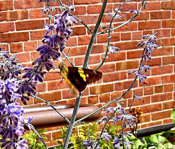 Mothra vs. Flowa