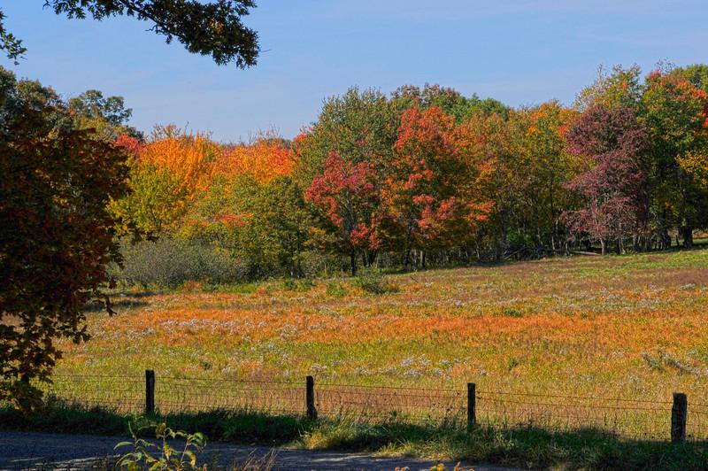 Fields near Mabry Mill