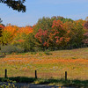 Fields near Mabry Mill