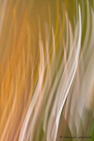 Palm Frond Blur