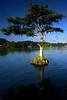 WPP2273  Cypress at Dusk