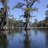 A typical Caddo Lake view