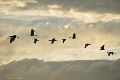Cranes in silhouette.