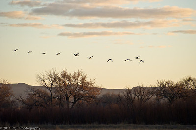 Sunrise with sandhill cranes.  Bosque del Apache, NM