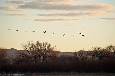 Sunrise with sandhill cranes.  Bosque del Apache, NM