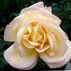Rose Garden in Honor of Rose Kennedy in Boston