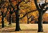 Olmsted Park, Jamaica Plain - Boston, MA, USA