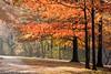 Olmsted Park Foliage - Boston, MA, USA