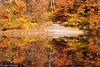 Wards Pond Foliage III, Jamaica Plain - Boston, MA, USA