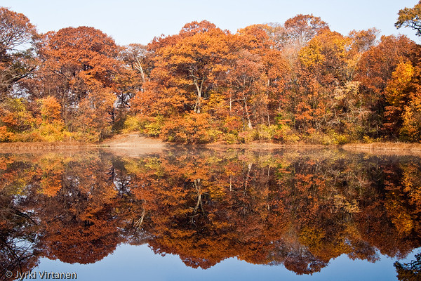 Wards Pond Foliage II, Jamaica Plain - Boston, MA, USA