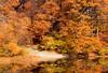 Wards Pond Foliage IV, Jamaica Plain - Boston, MA, USA