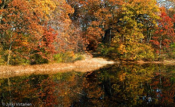 Wards Pond Foliage, Jamaica Plain - Boston, MA, USA