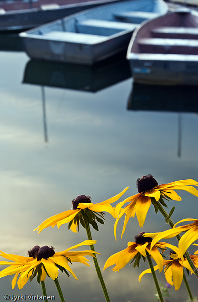 Flowers & Boats - Boston, MA, USA