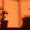 Geranium shadow, Mexico.