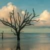 Botany Bay Edisto Island 2015-118