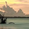 Botany Bay Edisto Island 2015-120