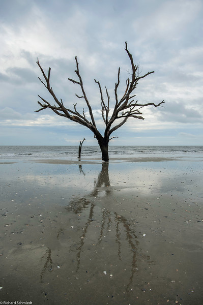 Botany Bay Edisto Island 2015-109