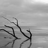 Botany Bay Edisto Island 2015-101
