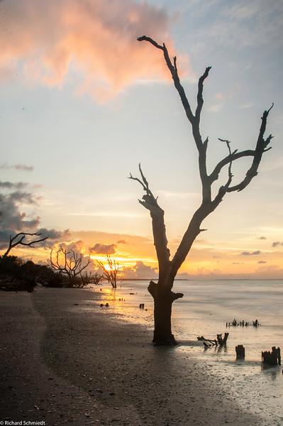 Botany Bay Edisto Island 2015-104