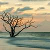 Botany Bay Edisto Island 2015-111