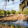 Botany Bay Edisto Island 2014-111