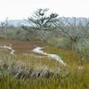 Botany Bay Edisto Island 2014-101
