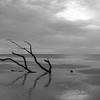Botany Bay Edisto Island 2015-114