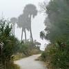 Botany Bay Edisto Island 2014-102