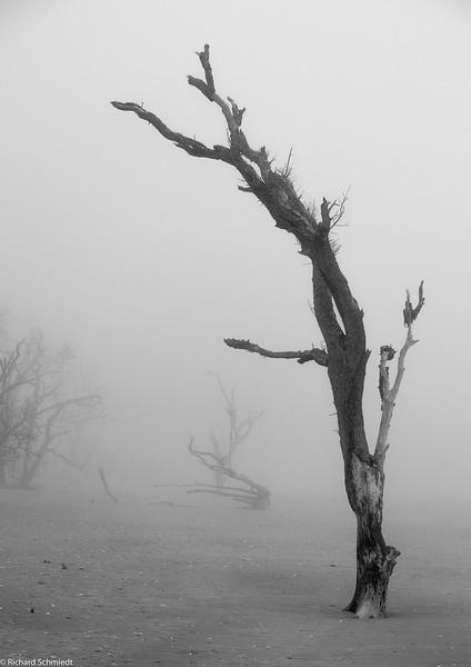 Botany Bay Edisto Island 2014-103