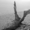 Botany Bay Edisto Island 2014-105