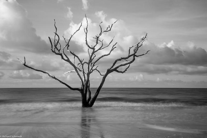Botany Bay Edisto Island 2015-113